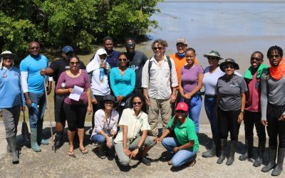 Protecting the natural seawall of Guyana with a sustained monitoring and evaluation systems of mangrove forests