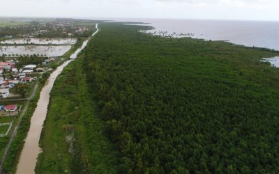 Agrilinks features article about SERVIR-Amazonia's contribution to mangrove monitoring in Guyana