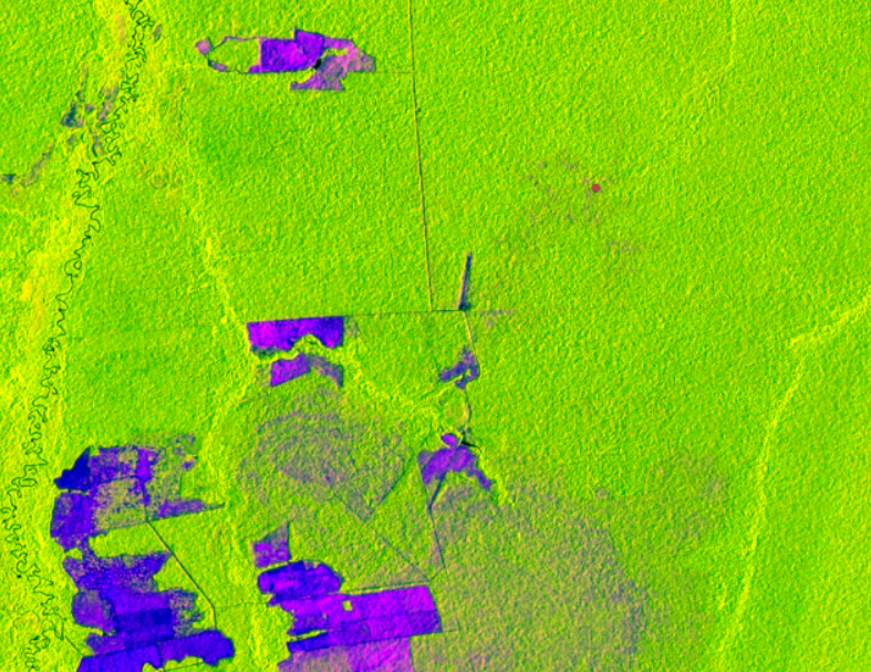 ClimateLinks features SERVIR-Amazonia work on Mapping Forest Degradation Using Cloud-Penetrating Satellite Imagery