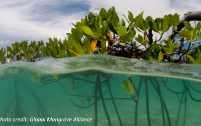 Understand, quantify, and monetize the value of mangrove ecosystem services in Guyana, a winning strategy